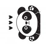 Petit panda 2