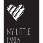 Petit panda 4